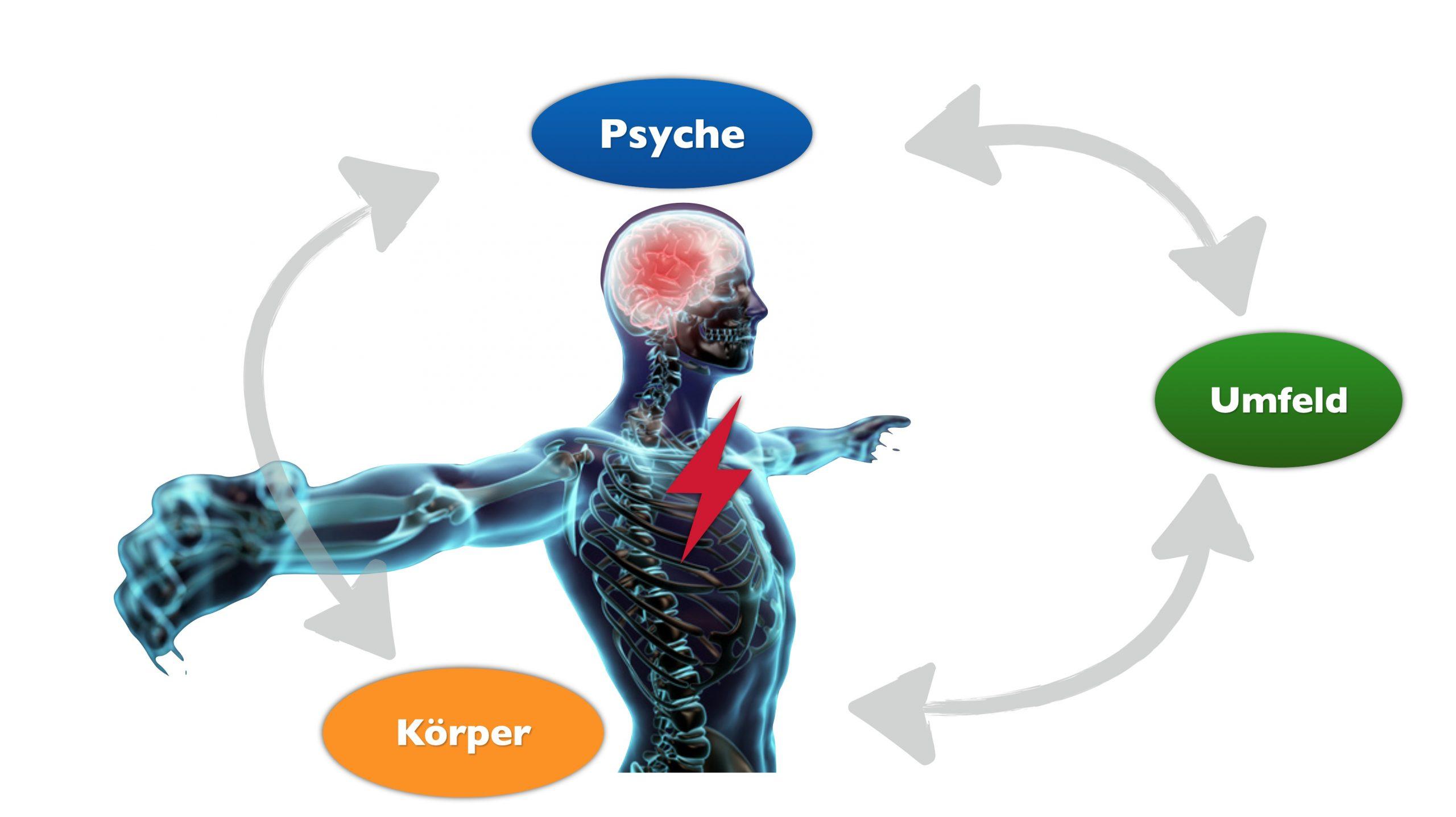 das Biopsychosoziale Modell als Erklärung des Readiness Ansatzes